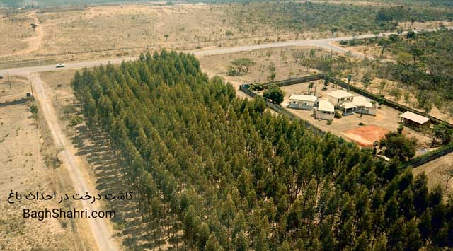 احداث باغ و عملیات کاشت درخت