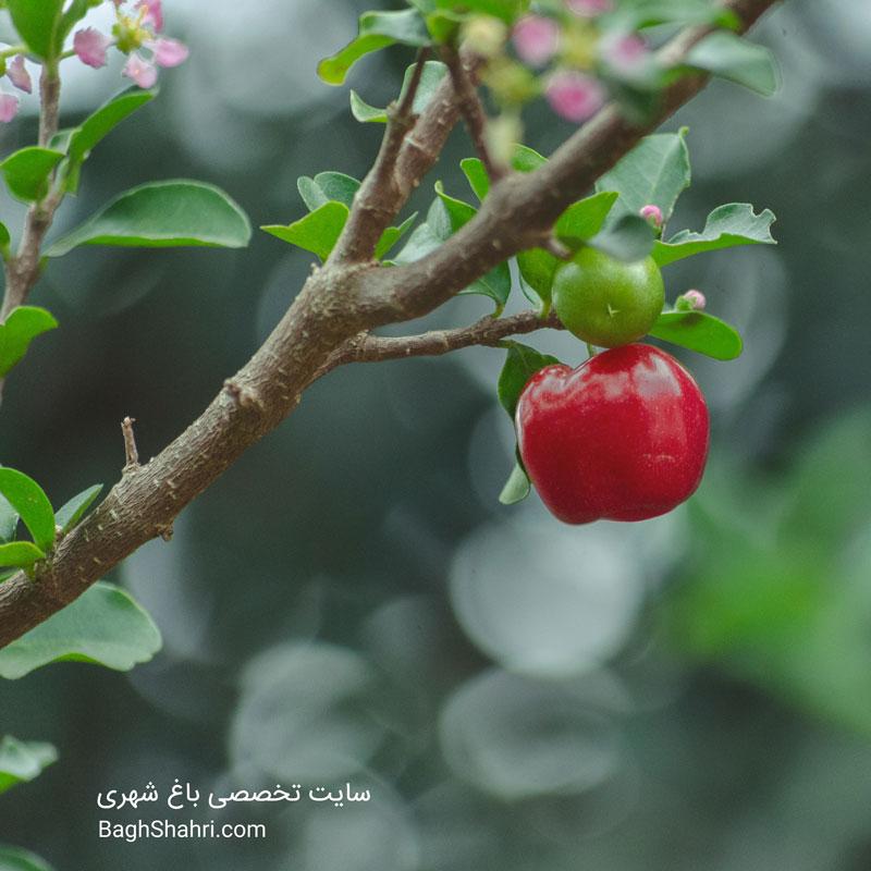 علل ریزش برگ و میوه های نارس از درختان